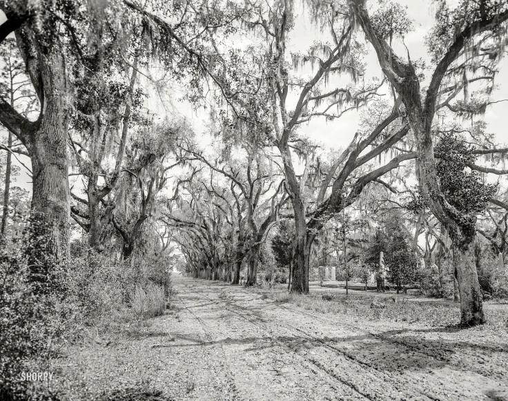 bonaventure cemetery 1901