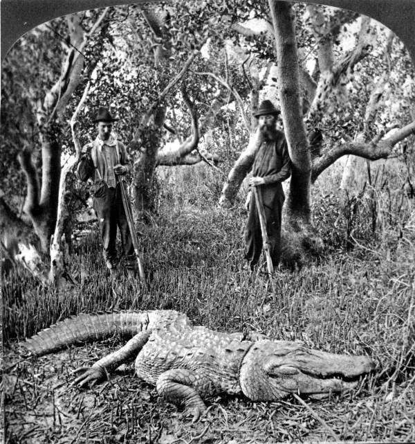 alligators hunters in 1882 everglades