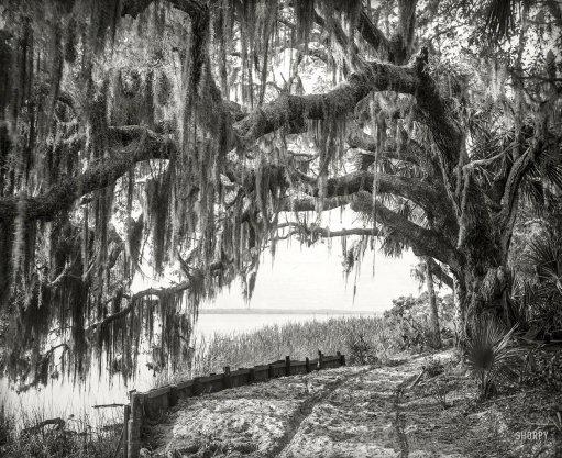 arch oak