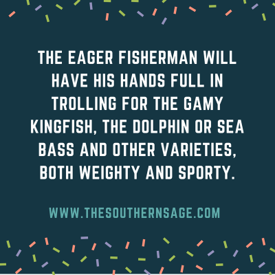 beauty of biscayne. The eager fisherman will have his hands full in trolling for the gamy kingfish, the dolphin or sea bass and other varieties, both weighty and sporty.