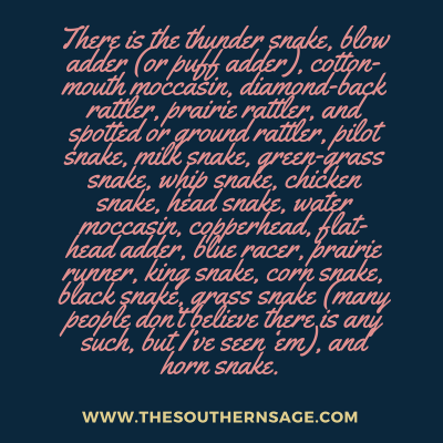 sneaky serpents. There is the thunder snake, blow adder (or puff adder), cotton-mouth moccasin, diamond-back rattler, prairie rattler, and spotted or ground rattler, pilot snake, milk sn